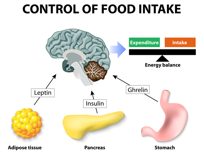 Appetite Management and Control Process