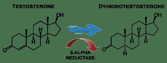 Testosteron to Dihydrotestosterone